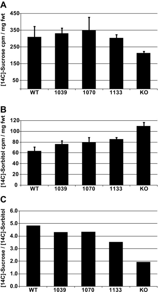 Uptake of [14C]-Suc and [14C]-Sorbitol into whole rosettes of wild type and experimental lines. A, Uptake of [14C]-Suc into whole rosettes, expressed as cpm per mg fresh weight; variation is standard deviation among duplicate samples. B, Uptake of [14C]-Sorbitol into whole rosettes, expressed as cpm per mg fresh weight; variation is standard deviation among duplicate samples. C, Uptake of [14C]-Suc in to whole rosettes, normalized against uptake of [14C]-Sorbitol.