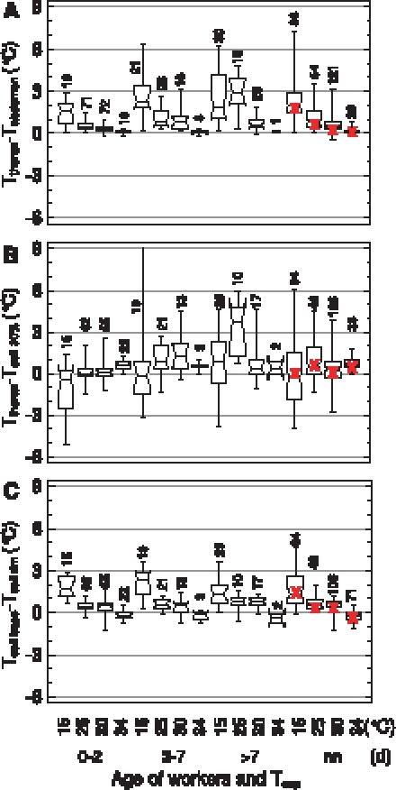 Thermal relations in open brood nest cells visited by bees.Box plots: median with 1st and 3rd quartile, maximum and minimum. Notches which do not overlap indicate significant differences (P<0.05). nn  =  unmarked workers; red crosses  =  medians of all age groups of marked bees (not significantly different from nn bees, except Tthorax-Tabdomen at Texp = 25 and 30°C, P<0.05, U test).Tcell 30% is the cell wall temperature at the estimated mean contact position of the thorax with the cell wall at 30% cell depth as measured from the base, calculated by linear interpolation between Tcell base and Tcell rim. Numbers  =  measurements (bees).