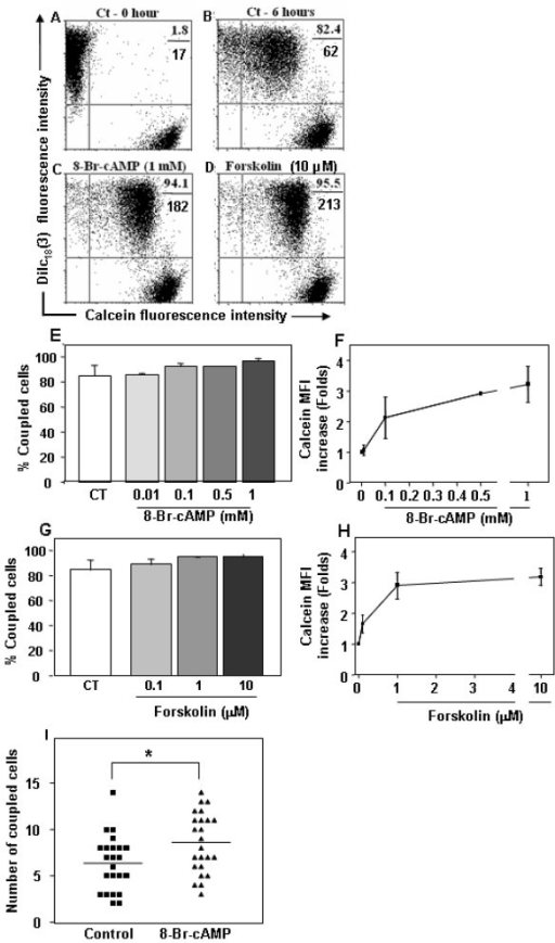Increase in cAMP enhances inter-TEC GJIC. Panels A and B depict untreated co-cultures of the mouse TEC line at zero and 6 hours time points, respectively. The percentage of double positive cells and the calcein geometric mean fluorescence intensity (MFI) of these populations are depicted at the upper right corner of each panel (%, above; MFI, below). Panels C and D show the inter-TEC coupling, following 6 hours of treatment with 1 mM 8-Br-cAMP or 10 μM forskolin. Both treatments enhanced the calcein mean fluorescence intensity of coupled cells (double positive cells). These data are representative of at least 4 separate experiments. Such enhancements can also be seen in Panels E to H, depicting TEC co-cultures treated for 6 hours with increasing concentrations of either 8-Br-cAMP (E-F) or forskolin (G-H). While percentages of coupled TEC was not significantly modified (E, G), the geometric mean fluorescence of calcein quantified from the double positive cells tripled after both treatments (F, H). The results are representative of 3 independent experiments (mean SD). Panel I shows that 8-Br-cAMP was also capable of enhancing inter-TEC GJIC, in primary cultures of human TNC-derived epithelial cells. Numbers of coupled cells were count in blind. * p < 0.05.
