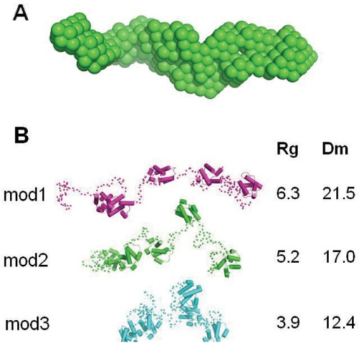 Solution structure of tandem ACP.(A) The three-dimensional bead model constructed by 'dammif' reveals a molecular volume of 96,600 Å3. (B) Simulation of the scattering data based on structural models reveals that an extended and flexible overall configuration can sufficiently account for the observed data. Figures A and B are on a different scale.