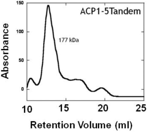 Size exclusion chromatography of tandem ACP.The tandem ACP analyzed on the same gel filtration column had the retention time of a protein three times its size (MWest  = 177,000).