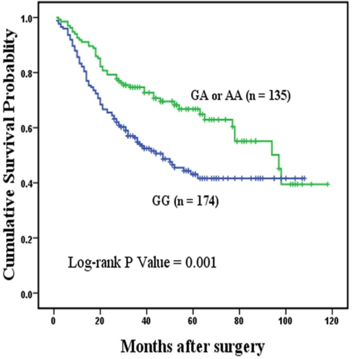 Overall survival curve in relation to MYT1L rs17039396 polymorphism in patients with cardia gastric cancer in dominant model.Figure 2 represents the Kaplan-Meier survival curve in relation to the effect of MYT1L rs17039396 polymorphism on overall survival of the patients with cardia gastric cancer in dominant model. Patients with GA or AA genotypes was at lower risk of death, compared with those with GG homozygotes. P value is 0.001, suggesting that MYT1L rs17039396 GA+AA genotypes were associated with better overall survival in 309 patients with cardia gastric cancer.