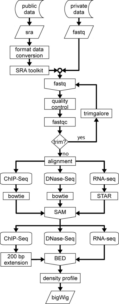 Flow diagram of the CODEX processing pipeline for ChIP-Seq, RNA-Seq and DNase-Seq. Data is downloaded from GEO and converted to fastq (in-house experiments are directly provided in this format). A quality test is performed and adapters and overrepresented sequences are removed from the raw reads. Trimmed sequences are then aligned and the resulting SAM file is converted to a BED format file from which a density profile is computed.