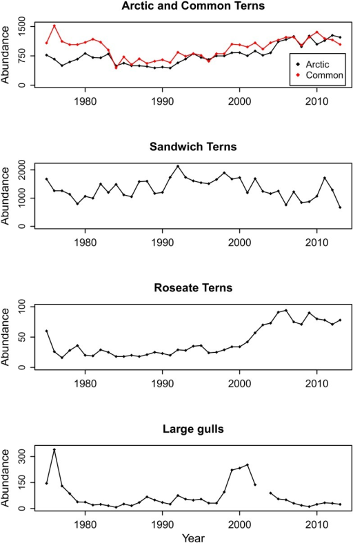 Breeding population abundance of four tern species and two large gull species on Coquet Island.Time series showing Arctic Tern (black), Common Tern (red), Sandwich Tern, Roseate Tern and large gull (Herring and Lesser Black-backed) breeding population abundance (number of breeding pairs) on Coquet Island from 1975–2013. One year (2003) of large gull breeding population abundance is missing.