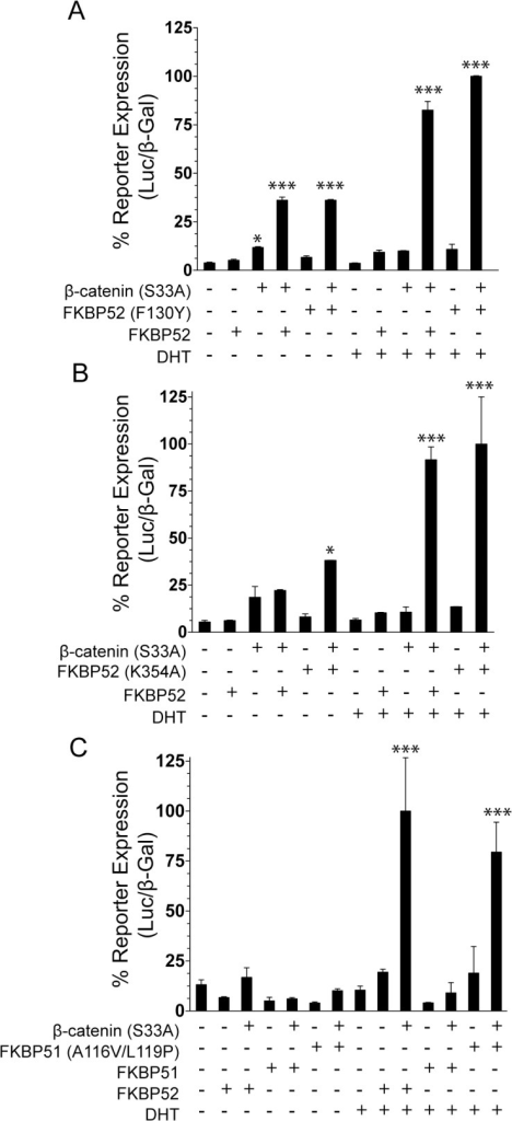 The FKBP52 Domain Requirements for FKBP52/β-Catenin Co-Regulation of AR Activity.(A-C) Wild type AR, the AR-inducible luciferase reporter plasmid, and the constitutively active β-galactosidase reporter plasmid were cotransfected simultaneously with each of the plasmids indicated for the different treatment groups in 52KO MEF cells. Cells were induced with 10 pM DHT or ethanol. Following cell lysis, AR expression was tested through a luciferase assay, followed by normalization to β-galactosidase activity. In all graphs, statistically significant differences as compared to the vector alone control for each hormone condition are denoted by asterisks (*p < 0.05; ***p < 0.001). (A) The assay was performed in the presence or absence of FKBP52, β-catenin (S33A), and the PPIase-deficient FKBP52 mutant FKBP52 (F130Y). The PPIase-deficient FKBP52 mutant retains the ability to synergize with β-catenin (S33A) indicating that PPIase enzymatic activity is not critical for synergy. (B) The assay was performed in the presence or absence of β-catenin (S33A), FKBP52, and the Hsp90 binding-deficient mutant FKBP52 (K354A). FKBP52 binding to Hsp90 is not required for the synergistic upregulation of AR activity by FKBP52 and β-catenin. C. The assay was performed in the presence or absence of β-catenin (S33A), FKBP52, FKBP51, and the FKBP51 (A116V/L119P) mutant. The FKBP51 gain of function mutant exhibits substantial synergism with β-catenin indicating that the FK1 domain and the proline-rich loop are important for synergy.