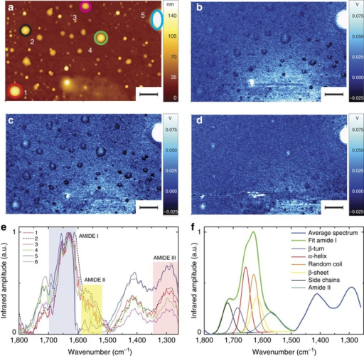 AFM-infrared chemical maps and spectra of Josephin proteins before incubation at 37 °C.(a) AFM height image. Infrared absorption map at (b) 1,700 cm−1 (amide I), (c) 1,655 cm−1 (amide I), (d) 1,300 cm−1 (amide III). Scale bar, 2 μm. (e) Infrared spectra. (f) Average oligomeric infrared spectrum and secondary-structure deconvolution of amide I band.