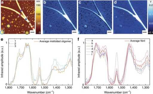 AFM-infrared chemical maps and spectra of fibrils and oligomers after 7-day incubation.(a) AFM height. Infrared absorption at (b) 1,700 cm−1 (amide I), (c) 1,655 cm−1 (amide I) and (d) 1,430 cm−1. Scale bar, 1 μm. Spectra of amyloid structures: (e) misfolded oligomer (labelled 1, 2 and 3 in a) and (f) fibrils (labelled a–f in a).