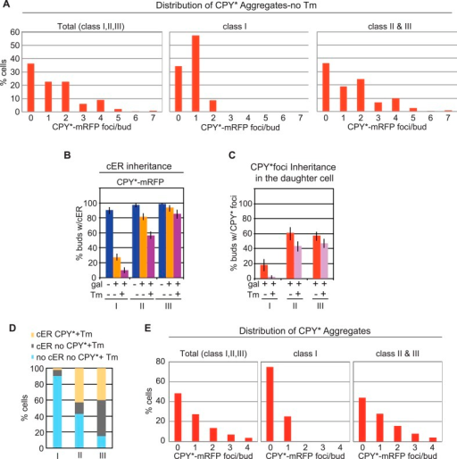 Inheritance of the ER and CPY* aggregates at different stages of the cell cycle.(A) Distribution of CPY*-mRFP aggregates per bud in all (Total), class I, and class II + III, and unstressed cells (without Tm). (B) cER inheritance by different classes of WT cells expressing CPY*-mRFP and left untreated or subjected to additional ER stress with Tm (1 μg/ml, 2 hr). (C) Percentage of daughter cells containing CPY*-mRFP aggregates following incubation with or without Tm. (D) Percentage of daughter cells containing cER and CPY*-mRFP aggregates (yellow), cER but no CPY*-mRFP aggregates (gray), and neither cER nor CPY*-mRFP aggregates (blue) for each class of cells. (E) Distribution of CPY*-mRFP aggregates per bud in all (Total), class I, and class II + III Tm-treated cells.DOI:http://dx.doi.org/10.7554/eLife.06970.005