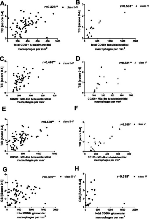 Tubular injury score (TSI) and glomerulosclerosis score (GSI) correlation with macrophage subtypes. TSI and GSI analyzed in renal biopsies from patients with lupus nephritis correlated with renal total, M2a-like and M2c-like macrophage invasion when analyzed by the Spearman test independently of the International Society of Nephrology/Renal Pathology Society class (a, c, e, g) and restricted to lupus nephritis (LN) class V (b, d, f, h). a Correlation between TSI in all patients with LN and total CD68-positive macrophages. b Correlation between TSI in patients with LN class V and total CD68-positive macrophages. c Correlation between TSI in all patients with LN and M2a-like macrophages. d Correlation between TSI in patients with LN class V and M2a-like macrophages. e Correlation between TSI in all patients with LN and M2c-like macrophages. f Correlation between TSI in patients withg LN class V and M2c-like macrophages. g Correlation between GSI in all patients with LN and total CD68-positive macrophages. h Correlation between GSI and patients with LN class V and total CD68-positive macrophages. Significant correlation is marked by asterisks (*p < 0.05; **p < 0.01)