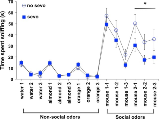 Both neonatal no‐sevo‐ and sevo‐treated mice showed no impairment in communication behavior based on olfactory habituation/dishabituation. Mice were able to habituate to the same scent when presented three consecutive times. This was shown by a significant decrease in the time spent sniffing from the first to the last presentation of the same scent. Repeated measure two‐way ANOVA resulted in F(2, 66) = 30, P < 0.0001 for water; F(2, 66) = 40, P < 0.0001 for almond; F(2, 66) = 40, P < 0.0001 for orange; and F(2, 66) = 40, P < 0.0001 for social 1 and F(2, 66) = 5, P < 0.01 for social 2. There was no treatment difference on nonsocial and social 1 odor habituation. These mice were also able to dishabituate from old scents when new scents were presented. This was shown by a significant increase in every transition between the last presentation of the old scent to the first presentation of the new scent. A two‐way ANOVA resulted in F(1, 66) = 31, P < 0.0001 for transition from water to almond; F(1, 66) = 20, P < 0.0001 for transition from almond to orange; F(1, 66) = 127, P < 0.0001 for transition from orange to social 1; and F(1, 66) = 14, P < 0.001 for transition from social 1 to social 2. There was no treatment difference on odor dishabituation. However, sevo‐treated mice were observed to have a social interaction abnormality in this paradigm. There was a treatment difference on social 2 odor habituation, in which a repeated measure two‐way ANOVA resulted in F(1, 66) = 4, P = 0.05 for treatment. Asterisk (*) denotes P = 0.05 for treatment effect on social 2 odors: mouse 2‐1, 2‐2, and 2‐3 (N = 18 for no sevo; N = 17 for sevo).