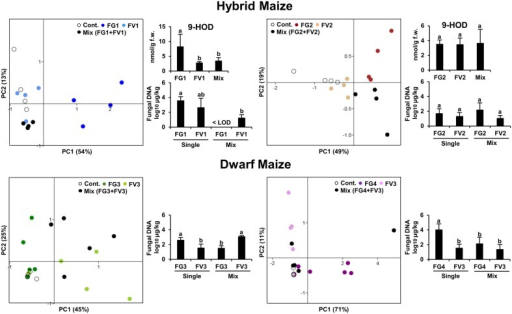 Principle Component Analysis (PCA) of the volatile infection biomarkers in infected and uninfected maize ears for hybrid and dwarf maize. Each dot represents one replicate from each treatment. 9-HOD: (10E,12Z)-9-hydroxy-10,12-octadecadienoic acid. FW, fresh weight. Different letters indicate statistical differences (p < 0.05) Tukey's pairwise test.