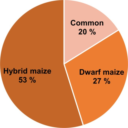Pie chart representing the percentage of common and specific infection biomarkers to hybrid and dwarf maize. The numbers take into account identified, tentatively identified, and unidentified volatiles.