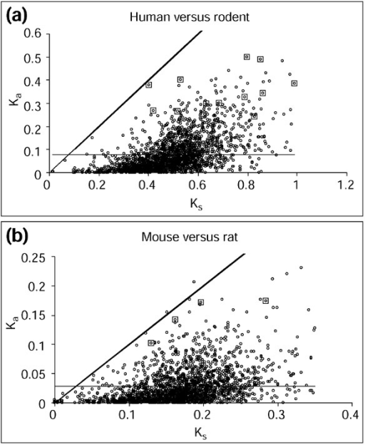 Non-synonymous (Ka) versus synonymous (Ks) substitution rates for the human-mouse-rat orthologous protein sets. (a) Average Ks and Ka for the human-mouse and human-rat pairwise comparisons. (b) Ks and Ka for the mouse-rat pairwise comparisons. Thick diagonal line, Ks = Ka; thin horizontal line, average Ka. All values are shown with circles and the values corresponding to the functionally diversified proteins are indicated by larger squares.