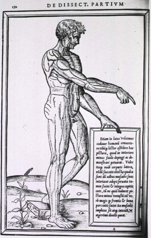 <p>Male figure standing in right profile, right arm extended; muscles of the body are defined through shading, no further identification is provided.</p>