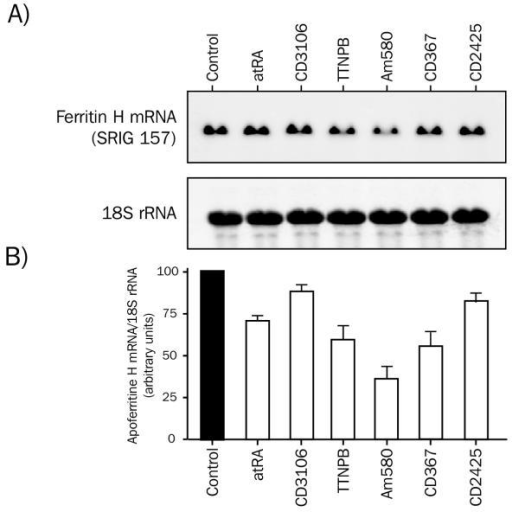 Expression of ferritin H mRNA in HeLa cells treated with different ligands of the retinoic acid receptor. HeLa cells were treated with the different ligands for four hours. Total RNA (20 μg) was probed sequentially with fluorescein-labeled partial human ferritin H cDNA and 18S rRNA probes. Blots were quantified using a Storm™ apparatus. Values for the ferritin H transcript were normalized to the 18S rRNA level. A) Upper panel: ferritin H transcript in HeLa cells treated with various retinoids. Lower panel: 18S rRNA. B) Quantification of ferritin H expression. Results are presented as the mean +/- S.E.M. of three different experiments. Cells were treated with 25nM atRA, 30nM CD3106, 80nM TTNPB, 20 nM Am580, 10nM CD367 and 100nM CD2425 for 4 hours.
