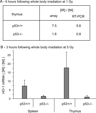Gamma-irradiation induced the expression of HO-1 in p53+/+ but not in p53−/− mice. (A) Total RNA was extracted from thymus of p53+/+ and p53−/− mice either non-irradiated or whole body irradiated at a dose of 1 Gy. The thymus was taken 6 h post-irradiation. Hybridization to cDNA arrays of mouse stress/toxicology genes (AtlasTM filter arrays, Clontech, Palo Alto, CA, USA) was performed as described in Materials and Methods section. Signal intensity was normalized as described in Materials and Methods section. The normalized signal calculated for the thymus of irradiated mice was expressed relative to the thymus of non-irradiated mice. Results from microarray analysis (array) were confirmed by real-time quantitative RT-PCR as described in Materials and Methods section. The relative level of HO-1 mRNA measured by RT-PCR was normalized relative to GAPDH mRNA and the level of stimulation was calculated relative to non-irradiated animals. (B) HO-1 mRNA induction in thymus and spleen of mice at 3 h following whole body irradiation at a dose of 5 Gy. The level of HO-1 mRNA estimated by real-time quantitative RT-PCR was normalized as described below. The graphs represent the mean of four independent experiments with their respective standard deviation. NI, non-irradiated mice; IR, irradiated mice.
