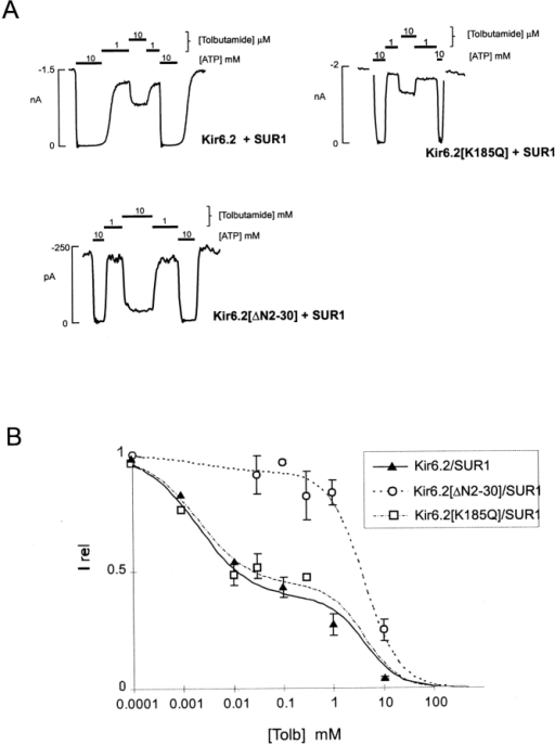 Tolbutamide sensitivity of KATP currents from cells coexpressing Kir6.2, Kir6.2[ΔN2-30], or Kir6.2[K185Q] mutant subunits and SUR1. (A) Representative currents recorded from inside-out membrane patches containing wild-type or mutant KATP channels at −50 mV in Kint solution (see methods). Patches were exposed to differing [tolbutamide] or 10 mM ATP, as shown. (B) Steady state dependence of membrane current on [tolbutamide] [mean ± SEM, relative to current in zero tolbutamide (Irel)] for wild-type and mutant channels (from records such as those shown in Fig. 1 A). Data points represent the mean ± SEM (n = 3–8 patches). For all channels, the lines are fits of the sum of two Hill components (as in Gribble et al. 1997a), each of the form {Irel = 1/[1 + ([tolbutamide]/K1/2)H]} with H fixed at 1.3 in each case, and the K1/2 = 2 μM (high affinity) and 4.2 mM (low affinity). The relative fraction of each component was varied. The high-affinity component was 40, 35, and 7% for wild-type, Kir6.2[K185Q]/SUR1, and Kir6.2[K185Q]/SUR1 channels, respectively.