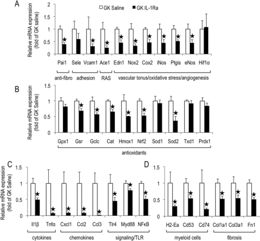IL-1Ra treatment reduces the expression of most of the selected genes for endothelial activation, oxidative stress, myeloid cells, and fibrosis in GK islets.Pancreatic islets were isolated from GK rats following 1-month-treatment with IL-1Ra by s.c. injections (GK saline n = 6, GK IL-1Ra (100 mg/kg/day), n = 5). For each animal, total RNA was extracted from isolated islets and quantitative RT-PCR was performed for the indicated genes, and expressed relative to GK saline. *p<0.05 using Student's t-test.