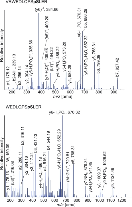Fragment ion spectra of the phosphopeptides VRWEDLQPSpSLER and WEDLQPSpSLER, both representing the phosphorylated Ser487 of the GC-A receptor.