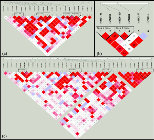 The graphical output from Haploview. The markers tested and the haplotype blocks constructed for (a) LRRN1, (b) LRRN3 and (c) LRRTM3 are included. D' values are indicated (bright red corresponds to D' = 1, with the colour tending towards white as D' tends towards 0).