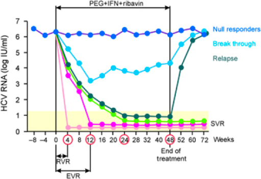 Interferon And Ribavirin Long Term Effects
