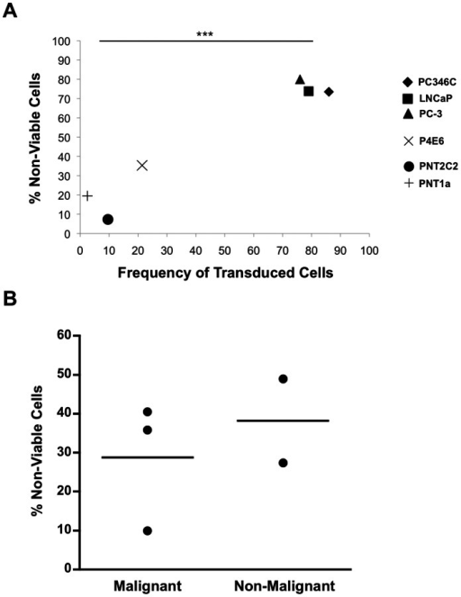 Reduction in cell viability following transduction with a BV expressing a nitroreductase-IRES-EGFP expression cassette and treatment with the pro-drug CB1954.(A) Percentage of non-viable cells at 48 h post-transduction with BV-[CMV-NTR-EGFP] (MOI = 500) and treatment with CB1954 in a panel of prostate cell lines, shown relative to frequency of transduced cells and adjusted for untreated controls. Malignant cell lines: PC346C (♦), PC3 (▴),LNCaP (▪), P4E6 (×); Non-malignant cell lines: PNT1A (+), PNT2C2 (•). Statistics represent t-test between PC346C/PC-3/LNCaP vs. PNT1A/PNT2C2. (B) Percentage of non-viable cells at 30 h post-transduction with BV-[CMV-NTR-EGFP] and treatment with CB1954 in individual primary prostate epithelial cell samples (n = 3 malignant and n = 2 non-malignant), adjusted for untreated controls.