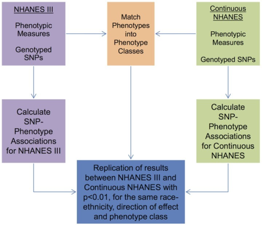 Overview of the approach for this study.Genotypic and phenotypic data were collected in NHANES III and Continuous NHANES. The phenotypes for the two studies were matched into phenotype classes. Comprehensive associations were calculated for the genotypes and phenotypes for each survey independently. The results that were found in both surveys, with p<0.01, for the same phenotype-class, and race-ethnicity, and same direction of effect, were maintained for further inspection in this study.