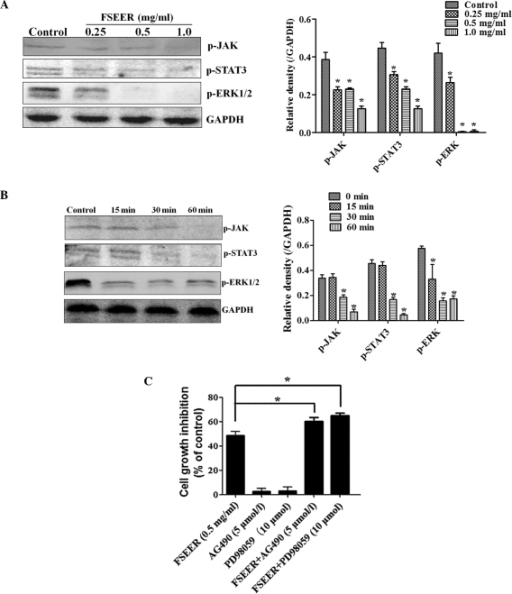 Inactivity of FSEER on the JAK/STAT3 and ERK signaling pathways in TE-13 cells. (A) TE-13 cells were treated with FSEER at 0.25, 0.5 and 1.0 mg/ml for 60 min and with (B) 0.5 mg/ml FSEER for 15, 30 and 60 min. (C) Effects of AG490 (5 mol/l) or PD98059 (10 μmol/l) alone or in combination with FSEER on the FSEER-mediated TE-13 cell proliferation. *P<0.05, compared with the control group. FSEER, Forsythia suspensa ethanolic extract of the root; p-JAK, phosphorylated Janus kinase; STAT, signal transducer and activator of transcription; ERK, extracellular-signal-regulated kinase.
