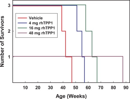 Survival times of TPP1–/– Dachshunds in the four treatment groups. Two of the dogs given the 16 mg dose were euthanized prior to reaching end-stage disease because they had developed meningitis or obstructive hydrocephalus. The dog receiving the 48 mg dose was euthanized before reaching end-stage disease because it had developed obstructive hydrocephalus. All remaining dogs were euthanized when they reached end-stage disease.