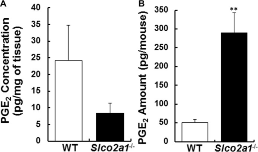 PGE2 levels in lung tissue homogenates and BALF of BLM-treated mice.(A) PGE2 concentrations were quantified in lung tissue homogenates of WT (open column) and Slco2a1-/- (closed column) mice. (B) Amounts of PGE2 in BALF were measured by means of LC-MS/MS as described in Material and Methods or S1 Table. Each column shows the mean of four individual determinants with SEM. Student's t-test was used for statistical analysis (**, p<0.01).