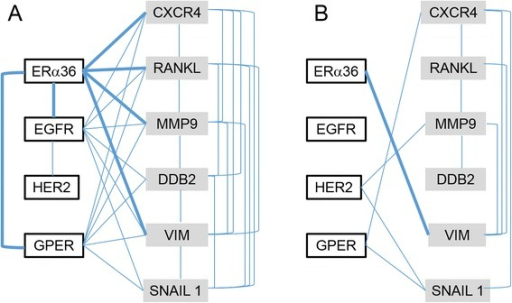 Gene expression network modeling in [ER+] and [ER-] samples. Graphs were designed by computing nonlinear correlation and mutual information between each gene expression pair in either ER-positive (a) or ER-negative (b) samples. The vertices represent genes. The edges linking the vertices indicate that independence between gene expressions is less than 0.05 and links for ERα36 are in bold. P-values are given in Additional file 1: Table S1A and Additional file 2: Table S1B, respectively