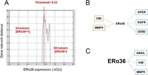 Gene expression network modeling depending on ERα36 expression level. a Network distance characterization as a function of ERα36 expression level (see text for details). Expression level varied between 0 and 20 in the samples expressing ERα36 (x-axis). With step of 0.5 on ERα36 expression level, population was divided into two sub-groups for which networks were computed. A distance between corresponding networks was calculated (y-axis). The ERα36 expression threshold corresponding to the most different gene networks was computed and was equal to 8.35. b–c Graphs were designed by computing nonlinear correlation and mutual information between each gene expression pair in either low ERα36 [ER α36+] expressing (b) or high ERα36 [ERα36++] expressing (c) samples. The vertices represent genes. The edges linking the vertices indicate that independence between gene expressions is less than 0.05. Positive correlations are in blue and negative correlations in red. Correlation values are given in Additional file 3: Table S2A and Additional file 4: Table S2B and P-values in Additional file 5: Table S3A and Additional file 6: Table S3B, respectively