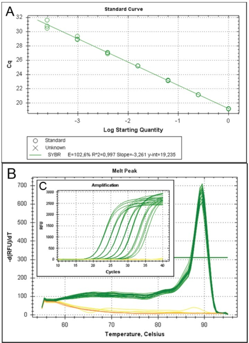 The suitability of the newly designed primers was verified in separate experiments by performing dilution series using the PCR products (Table A2) as well as dilution series of a cDNA pool (A). In melt curve (B) and amplification plots (B) samples are shown in green while controls (no reverse transcription control and no template control) are shown in yellow and orange respectively.