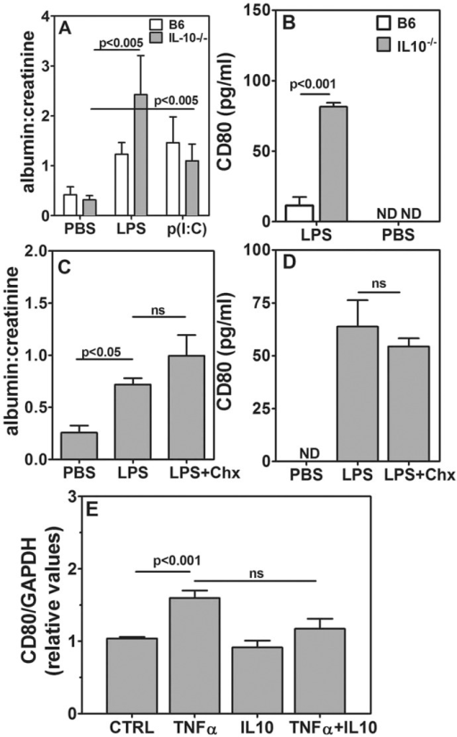 Chitohexaose blocks TLR-mediated TNFα induction through IL-10. (A) Comparison of urinary albumin:creatinine ratios in B6 and IL-10−/− mice given 1 μg of LPS, 10 μg of p(I:C) or PBS (five mice per group). (B) Comparison of urinary CD80 levels in B6 and IL-10−/− mice receiving 1 μg of LPS or PBS (six mice per group). (C) Comparison of urinary albumin:creatinine ratios in IL-10−/− mice given PBS, 1 μg of LPS without or with 250 μg chitohexaose (five mice per group). (D) Comparison of urinary CD80 levels in IL-10−/− mice given PBS, 1 μg of LPS without or with 250 μg of chitohexaose (five mice per group). (E) Relative CD80 mRNA expression levels in E11 podocytes that had been exposed to PBS (CTRL), TNFα alone (1 ng/ml), IL-10 alone (50 ng/ml) or in combination (n=6, three independent experiments). Data represent mean±s.e.m. ND, not detectable; ns, not significant.