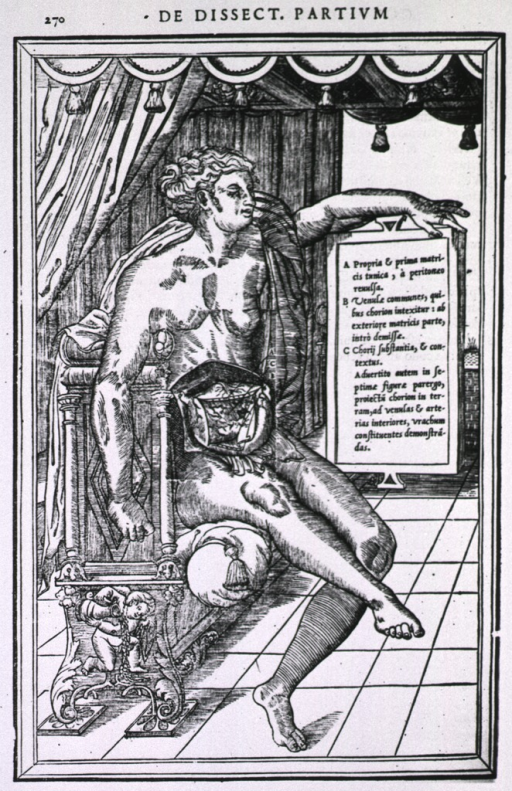 <p>Human figure, seated, with the abdominal cavity exposed.</p>