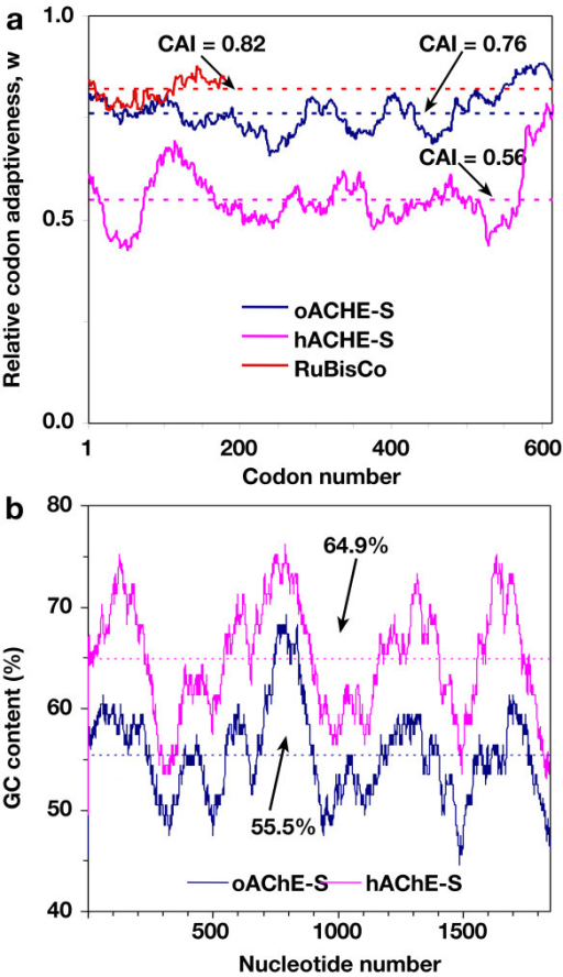 Comparison of the codon usage and GC content of hACHE-S and oACHE-S. (A) Codon usage, expressed as a moving (window = 50 codons) geometric mean of the relative codon adaptiveness (w) was scored for hACHE-S (pink), oACHE-S (blue), and the highly-expressed plant gene rbcS (red). The CAI values of each (w averaged over the entire gene) are plotted as broken lines. Note that optimization increased the CAI value of the ACHE gene, bringing it close to the CAI value of the rbcS gene, which is even for this highly expressed gene lower than the theoretical maximal value of 1. (B) The GC content is scored for 100-base segments centering at each of the indicated bases of the hACHE and oACHE mRNA (taking into account the common TEV leader). Broken lines – the GC content of the entire coding regions.