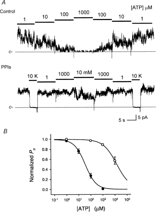 Concentration-response for ATP inhibition of KATP. Ascending and descending [ATP] response relationships in a single multichannel patch before (A) and after (B) treatment with PPIs (10 min, 1 mg/ml). KATP currents were recorded in inside-out patches from COS-1 cells transfected with SUR2/Kir6.2. Bars and numbers represent ATP concentration except that in B 10K stands for an internal solution with 10 mM [K+] that produced a 0 current level for equimolar [K+] at 0 mV. (C) Summary data for the ATP block concentration–response relationship before and after treatment with PPIs from experiments such as those shown in A and B. Symbols and error bars represent the mean ± SE from four control experiments and three or four experiments after treatment. Summary data for ATP sensitivity was obtained by fitting the dependence of normalized Po on [ATP] using the expression: P = Po,max {1 − 1 /[1 + (Ki/[ATP])S]} where P is the normalized Po, in ATP relative to the maximal Po (Po,max) in the absence of ATP or to 1 μM [ATP] that produced little or no inhibition; Ki is the half-inhibitory [ATP]; and S is the slope-factor or Hill coefficient. Po,max, Ki, and S were free parameters for fitting. Before treatment with PPIs, Ki = 34.9 ± 6.7 μM, and after treatment Ki = 15.6 ± 2.7 mM. (P < 0.001). The Hill coefficients S were 1.03 ± 0.11 versus 0.94 ± 0.17, respectively. In the inset, PPIs stands for the data collected after the patches was treated for 10 min with PPIs (1 mg/ml) and PPIs were washed out. The same label is used in the subsequent figure legends.