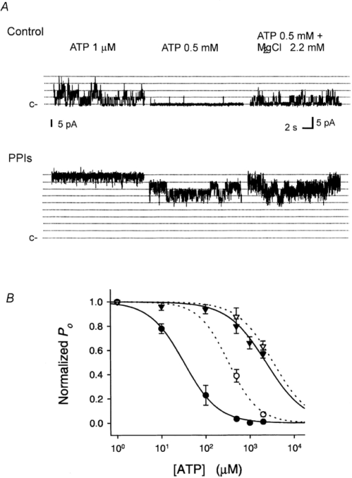 Effects of PPIs and Mg2+ on ATP inhibition. (A) Current traces recorded in a patch excised from a rat ventricular myocyte before (Control) and after 5-min treatment with PPIs (0.5 mg/ml) (labeled as PPIs). The dotted lines indicate unitary channel current levels. The unitary channel current level in MgCl2 2.2 mM was scaled up to the same level in Mg 0 to assist in making the comparison. c– denotes the closed level. In control, 0.5 mM ATP inhibited KATP (middle trace), but this inhibition was antagonized by MgCl2 2.2 mM (right trace). After treatment with PPIs, more channels were open in low [ATP], 0.5 mM was less effective in suppressing KATP, and MgCl2 2.2 mM slightly antagonized ATP inhibition. (B) Summary data for effects of PPIs and MgCl2 2.2 mM on ATP sensitivity were fitted as described for Fig. 2. The symbols represent the mean ± SE for nine patches. Before treatment with PPIs, Ki = 30 ± 2.8 μM in 0 Mg (•) and 333 ± 56 μM in 2.2 mM Mg (○) (P < 0.001). After treatment with PPIs, Ki = 2.3 ± 0.4 mM in 0 Mg (▴) and 3.4 ± 0.2 mM in 2.2 mM Mg (▵) (P = 0.03).