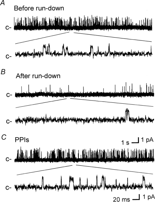 PPIs reactivate KATP current in Kir6.2ΔC35. Single-channel currents were recorded from an inside-out patch from a COS-1 cell transfected with Kir6.2ΔC35. c– indicates the closed open level. The bottom trace in each panel represents a detail at a greater time resolution of the record in the top panel. The diagonal lines indicate the part of the top record that was selected for display in the lower record. (A) KATP current recorded immediately after excision of the patch before run-down. (B) Current recorded 10 min after excision of the patch after the current had run down. (C) Current recorded after a 5-min treatment with PPIs (1 mg/ml).