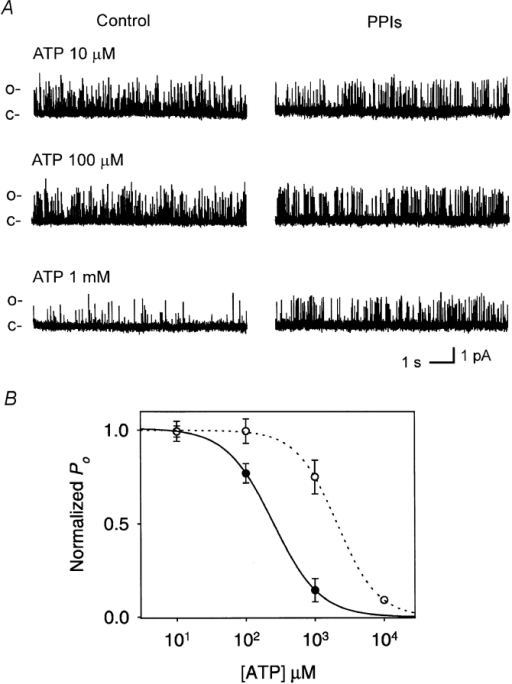 ATP block of Kir6.2Δ35 before and after treatment with PPIs (1 mg/ml). (A) KATP currents from single-channels recorded at the [ATP] indicated. Traces at left were obtained before treatment with PPIs; at right traces were obtained 10 min after treatment. c– and o– indicate closed and open current levels, respectively. (B) Concentration–response relationship of ATP block before and after treatment of Kir6.2ΔC35 with PPIs. Symbols and error bars represent the mean ± SE (n = 1–4 for each data point) in control and 10 min after treatment. Lines represent fitting of the data to a binding equation as in Fig. 2. Ki is the concentration of half inhibition and S is the slope factor or Hill coefficients. Ki = 247 ± 188 μm in control, and 2.17 ± 0.93 mM after treatment with PPIs (P < 0.001). S = 1.3 and 1.4 before and after treatment with PPIs, respectively.