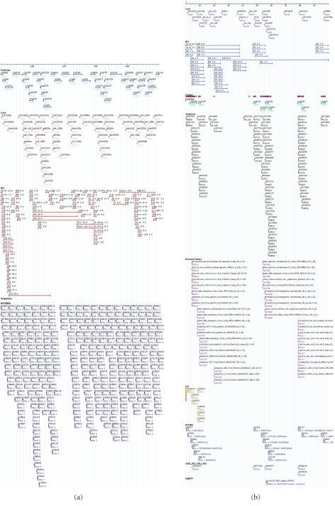 Description of chromosome 18 resources at SoyGD (a). Thecurrent GMOD representation of 50 Mbp of the 51.5 Mbp chromosome 18 (linkagegroup G) in SoyGD (a). shows the build 3 version of the chromosome(cursor), anchored contigs (top row, blue), DNA markers (second row of features,red), QTL in the region (third row, burgundy), MTP2 clones (B, H, and E fourthrow, dark blue). Not shown here were BAC clones, ESTs, BAC end sequences, andgene models (b) shows the build 4 representation of 10 Mbp of the 51.5 Mbpchromosome 18 in SoyGD. Shown are the chromosome (cursor), DNA markers (top rowof features, red); QTL in the region (second row, blue); coalesced clones(purple) comprising the anchored contigs (third row, green); BAC end sequences(fourth row black); BESs encoding gene fragments (fifth row, puce);EST hybridizations to MTP2BH (sixth row gold); MTP4BH clones (seventh row, darkblue); BESs derived SSR (eighth row, green); ESThybridizations inferred on build 4 from clones also in MTP2BH (ninth row,blue); WGS trace file matches from MegaBlast (tenth and last row, light blue).It is recommended for readers to visit updated sitehttp://bioinformatics.siu.edu/ to see a full detailed color version and a build5 view. The gaps between contigs will be filled in build 5 by contig mergessuggested by BESs-SSRs and contig end overlap data.