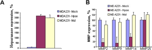 "Expression of MMPs in heparanase transfected MDA-231 human breast carcinoma cells.MDA-MB-231 cells were transfected with a mock (empty vector) or either active (Hpse) or mutated inactive (Mut) heparanase gene. Heparanase (A) and MMPs (B) mRNA expression levels were determined by real-time PCR, as described under ""Materials and Methods"". The appropriate primers are listed in Table 2. The expression levels determined in the mock transfected cells were regarded as 100%, and the levels in Hpse and mut-Hpse transfected cells were presented as percentage relative to the mock transfected cells. Decreased levels of MMP-2, MMP-9, and MMP-14 mRNAs were noted in cells over-expressing the active form of heparanase, but not the double mutant, inactive form of the enzyme."