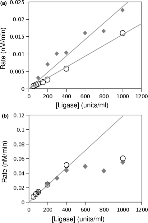 Rate of ligation versus concentration of T4 ligase at 37°C. The open circles show data from the 116o sequence, and the closed diamonds show data from the 116cl sequence. (a) The rate of formation of circular monomer increases linearly for all concentrations of ligase. (b) At high ligase concentration, the rate of dimer formation no longer increases linearly with ligase concentration. We find that ligation is linear up to 400 U/ml of ligase at 37°C, and therefore use ≤100 U/ml for our experiments at this temperature.
