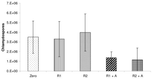 Mean (+- SD) chlamydospore quantity before incubation (time 0 h), after in vitro rumen digestion (12 h (R1) and 24 h (R2)) and after 4 h of in vitro abomasal digestion (R1+A and R2+A).