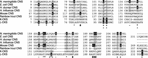 Partial amino acid sequence alignment of CNS enzymes from Neisseria meningitidis [23], Escherichia coli [29], Haemophilus ducreyi [20], Haemophilus influenza [30], mouse [31] and rainbow trout [24], and the two types of CKS enzymes from E. coli [32–34]. Sequences were aligned using the ClustalW program [35]. Residues highlighted in black have been identified as important in the literature and have roles assigned [12–18,20]: *, CTP-binding residue of the P-loop; (*), CTP-binding residue; ^, Neu5Ac-binding residue; #, Neu5Ac-binding residue forming part of the hydrophobic pocket; °, residue required in the quaternary organization of the molecule; -, residue lining the active site; +, Mg2+-binding residue. Residues highlighted in grey share identity with those highlighted in black.