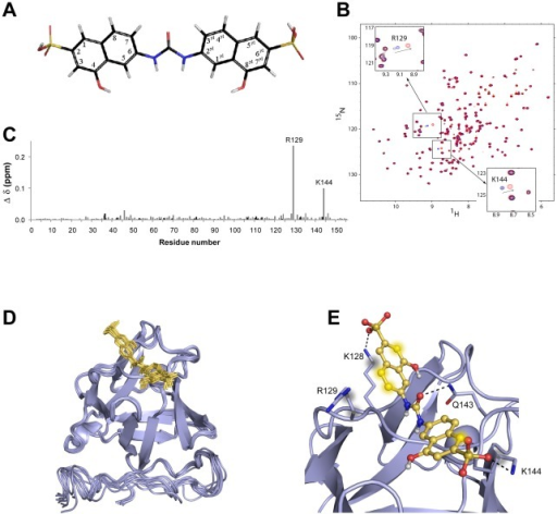 Mapping of FGF2/sm27 interaction by NMR and docking simulations.A) Sm27 molecule: 4-hydroxy-6-[(8-hydroxy-6-sulfonaphthalen-2-yl)carbamoylamino] naphthalene-2-sulfonic acid. B) Superimposed 1H-15N HSQC spectra of free FGF2 (black), FGF2:sm27 in stoichiometric ratios 1∶1 (blue) and 1∶2 (red). Spectral regions showing R129 and K144 behaviors are zoomed. C) Graphical representation of the combined HN and N FGF2 chemical shift perturbation determined for the various residues, according to [53] (), following the addition of sm27 in 2∶1 stoichiometric ratio. Gray and black bars refer to backbone and Asn, Gln and Arg side chain variations, respectively. D) Bundle of the first 10 structures of cluster 1 obtained with HADDOCK. FGF2 in shown as a blue cartoon, sm27 is shown in yellow sticks. E) Summary of the conserved protein-inhibitor interactions. K128, R129, Q143, and K144 side chains are shown as sticks and are labelled. H-bonds are depicted with black dotted lines and atoms involved in hydrophobic interactions are showed as blurred spheres.