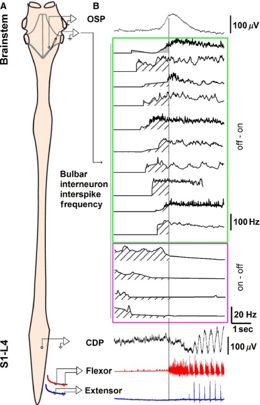Pooled Data Of The Frequency Profile Of Reticular Forma Open I