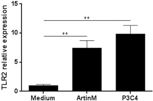 Enhanced TLR2 relative expression by ArtinM-stimulated macrophages.Peritoneal macrophages from C57BL/6 mice were incubated with ArtinM (39 nM) for 5 h. Medium was used as a negative control and P3C4 (1 µg/mL) was used as a positive control. RNA from macrophages were isolated and used for qRT-PCR as described in Materials and Methods. The results are expressed as the relative expression of TLR2 after quantification using the ΔΔCt method and normalized to β-actin expression. Statistical comparisons between stimulated cells and unstimulated were performed with one-way analysis of variance followed by Bonferroni's multiple comparison test. ** p<0.01.