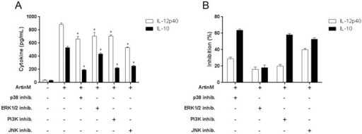 Cell signaling molecules that possibly mediate the macrophage activation induced by ArtinM.Peritoneal macrophages were pretreated with the inhibitors PD98059 (p42/44 MAPK or ERK 1/2), SB202190 (p38 MAPK), SP600125 (c-Jun N-terminal kinase), and LY-294002 (PI3K), or with medium alone (absence of inhibitor) and then stimulated with ArtinM (39 nM). After 48 h, IL-12p40 and IL-10 levels in the culture supernatants were assessed by ELISA. (A) Cytokine production reported as pg/mL (mean ± SEM) and statistical comparison were performed using a one-way analysis of variance followed by Bonferroni's multiple comparison test. *p<0.05. (B) Inhibition of ArtinM induced cytokine production after pre-incubation with the indicated inhibitors. The results are presented as the percent inhibition, which represents the ratio between uninhibited cells and those pretreated with inhibitors.