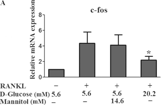 Effect of high glucose on the mRNA expression levels of c-fos and NFATc1. RAW264.7 cells were seeded at a density of 1×105 cells/well in 6-well plates and cultured with RANKL and different doses (5.6 and 20.2 mM) of D-glucose or mannitol for 5 days. The mRNA expression levels of (A) c-fos and (B) NFATc1 were analyzed using reverse transcription-quantitative polymerase chain reaction. Data are expressed as the mean ± standard deviation of the quantification of target expression relative to the untreated group following normalization against β-actin (2−ΔΔCt method). The untreated group were defined as the standard (=1). *P<0.05 and **P<0.01 vs 5.6 mM glucose-treated cells. RANKL, receptor activator of nuclear factor-κB ligand; NFATc1, nuclear factor of activated T cells c1.